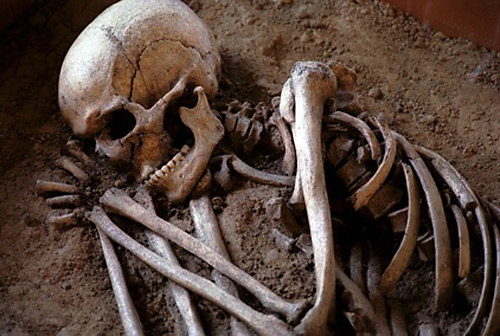 "can these bones live""? – bible student ministries, Skeleton"